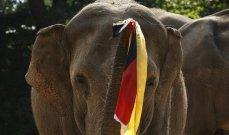 """يورو 2020 : الفيل """"ياشودا"""" يتوقع فوز المانيا على انكلترا في دور ال16"""